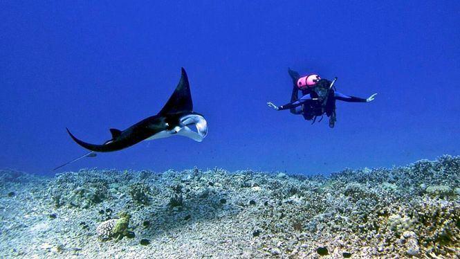 Mejores lugares de Centroamérica y República Dominicana para amantes del submarinismo