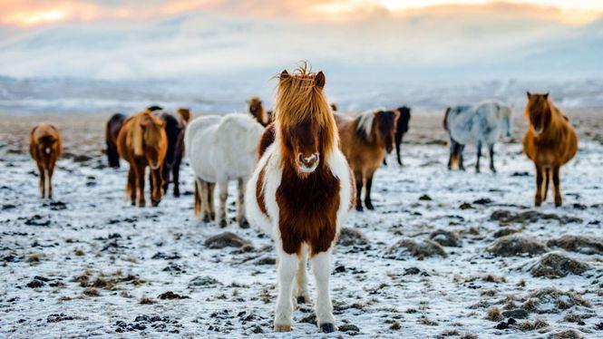 Razones para descubrir la tierra de hielo y fuego: Islandia