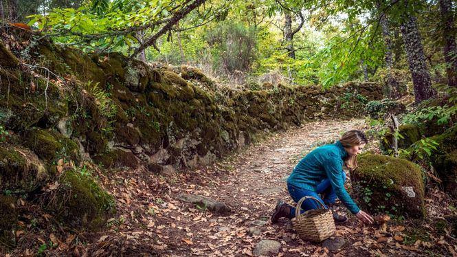 Salamanca, paraíso micológico en otoño