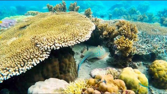 La empresa de Bahamas, Coral Vita, gana el prestigioso Premio medioambiental Earthshot