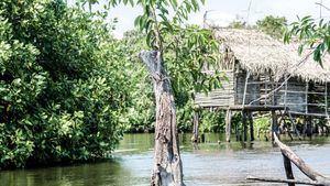 Riviera Nayarit, uno de los mejores lugares del mundo para la observación de aves