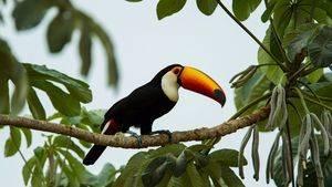 La belleza natural de Brasil en tres destinos que te deslumbrarán