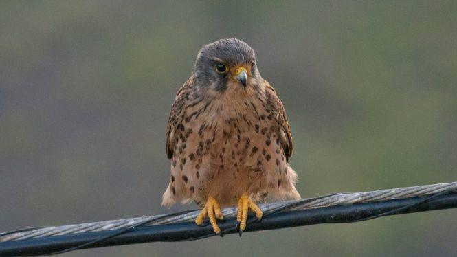 El Hierro organiza una jornada para avistamiento de aves