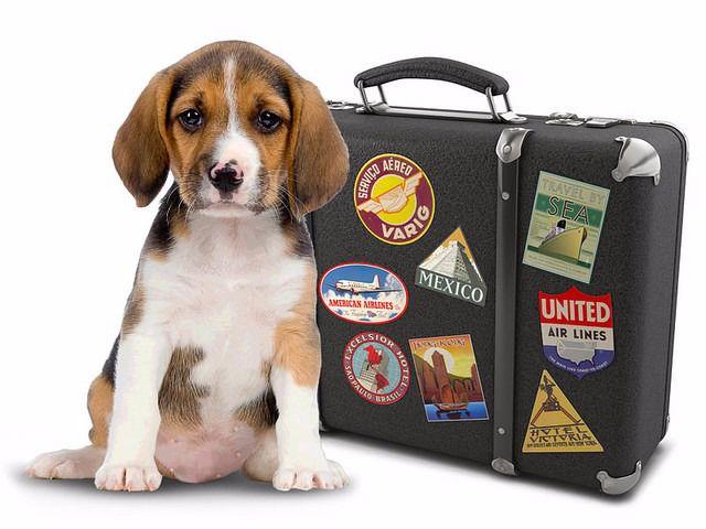 Consejos para viajar con mascota en verano