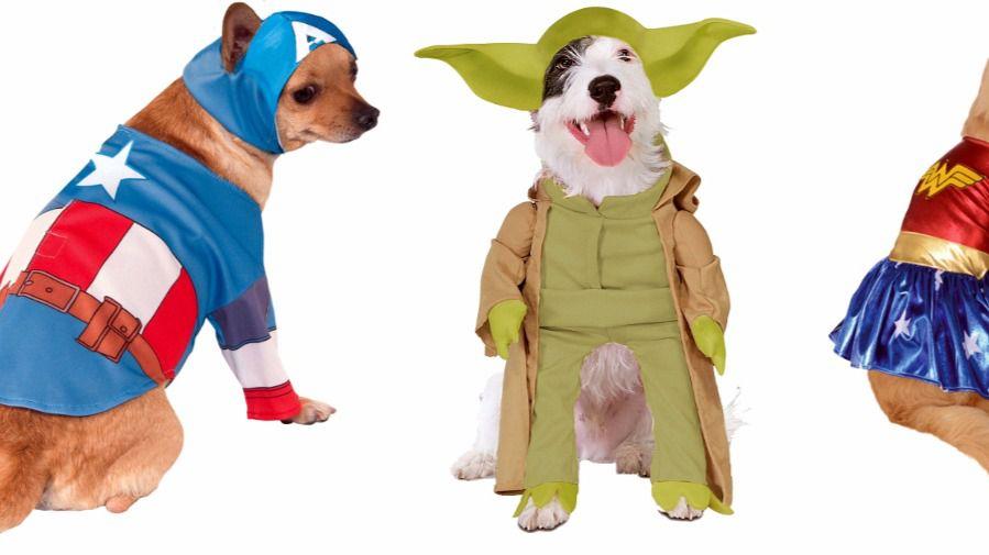 Las mascotas también se disfrazan en carnaval