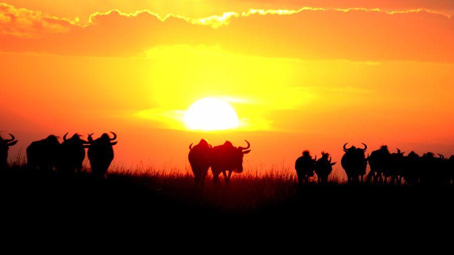 Kenia, el hogar del safari