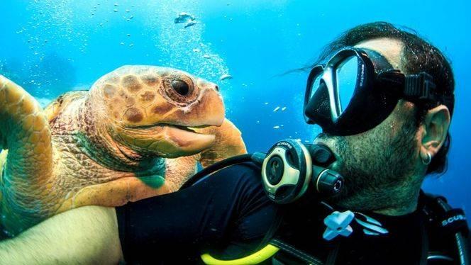Cinco inmersiones en el paraíso del submarinismo