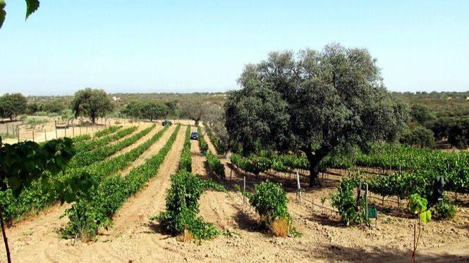 Garnacha Centenaria 2016, el vino más especial de Bodegas Cartema