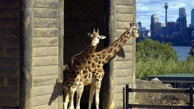 Leones, tigres y osos: Seis alojamientos para descubrir los mejores zoológicos del mundo