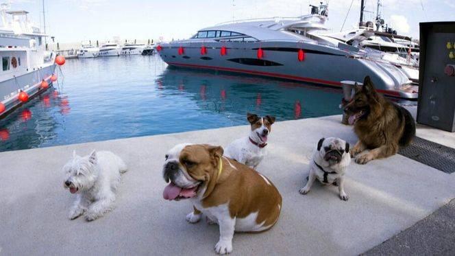 Doggie Race, una carrera con mascotas en el Port Adriano de Mallorca
