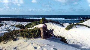 Orzola. Lanzarote
