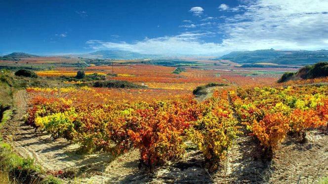 La D.O Rioja, es la preferida para visitar los fines de semana