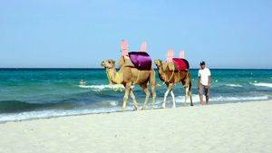 Dromedarios. Playa Djerba