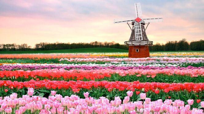 Transavia vuela a los mejores festivales de primavera de Francia y Holanda