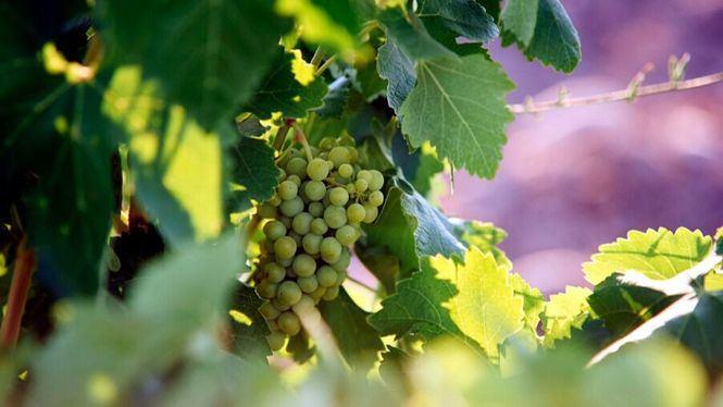 Tres vinos de Bodegas De Alberto incluidos en el Cuadro de Honor de la Guía Gourmets