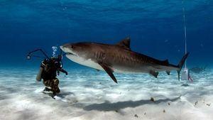 Las Bahamas: ¿te atreves a bucear con tiburones?