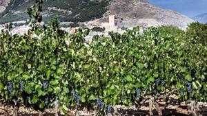 Vinos Alicante otorga a Villena su distinción de honor