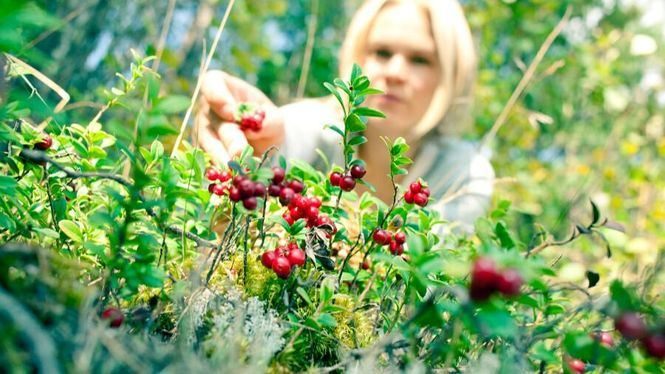 La nueva cocina finlandesa: del bosque al plato