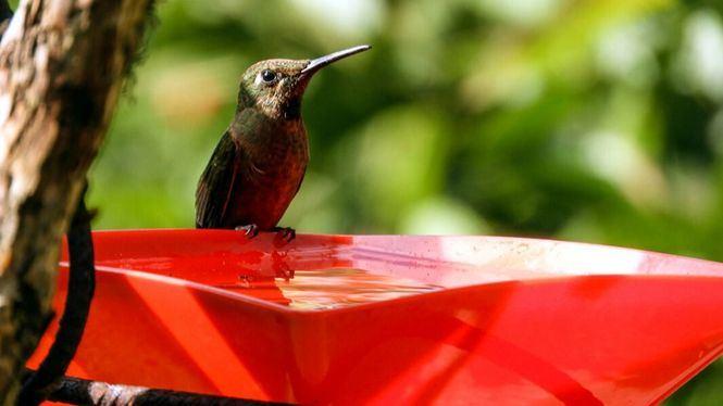 Colombia, un destino único para el avistamiento de aves