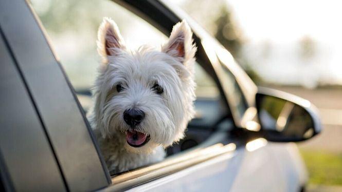 Consejos para viajar con tu mascota este verano
