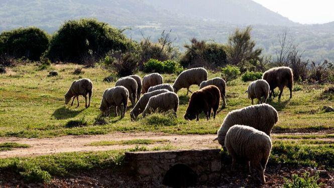 Recomendaciones de nuestros pastores para la prevención de incendios forestales
