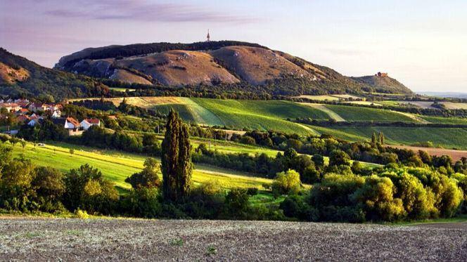 Escapada en bicicleta a las vendimias más hermosas de Moravia