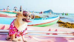 Vacaciones con perros: Barcelona, Costa Brava y Almería, los destinos más demandados