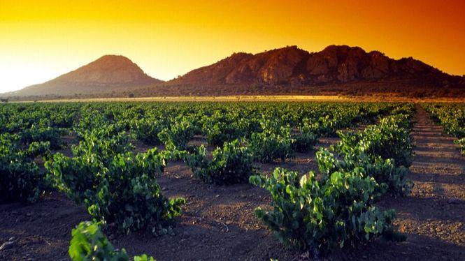 I edición de Vinopasión en la Ribera del Guadiana, enoturismo de emociones y sensaciones