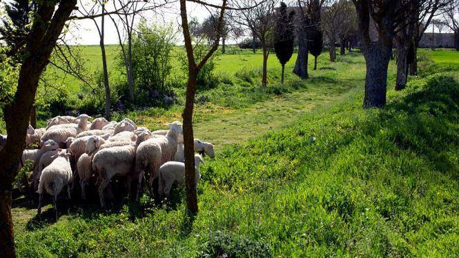 La concienciación medioambiental debe incluir también al ganado que habita en el medio rural