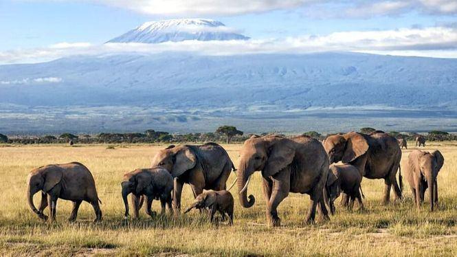 Elephant Listening Project, iniciativa impulsada por Microsoft para salvar a los elefantes