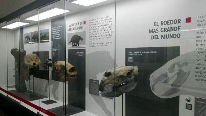 Reabre el Museo de Historia Natural de Uruguay en una nueva sede