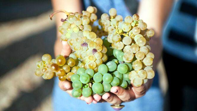 La Ruta del Vino de Rueda ofrece múltiples planes enoturísticos