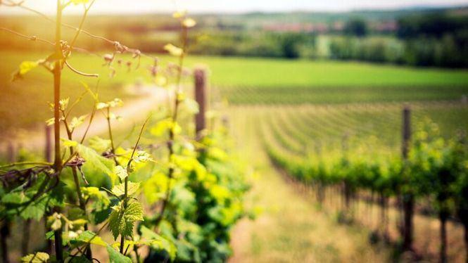 La vendimia, el momento para determinar el vino que vamos a consumir el próximo año