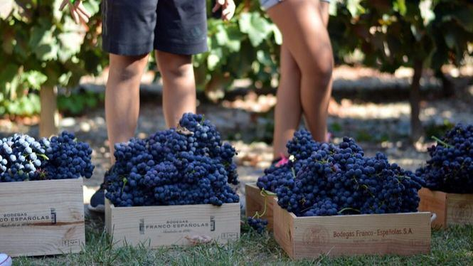 Vendimia en familia, en bodegas Franco-Españolas de Rioja