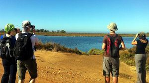 Observación de aves en el Algarve