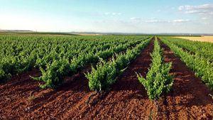 Medina del Campo, el corazón latente de una tierra de vinos legendarios