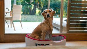 Can Lluc, alojamiento 100 % pet friendly