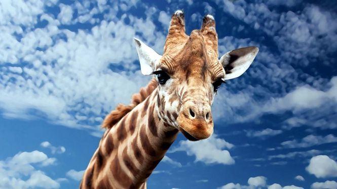 El origen del safari como vacaciones alternativas al turismo de sol y playa