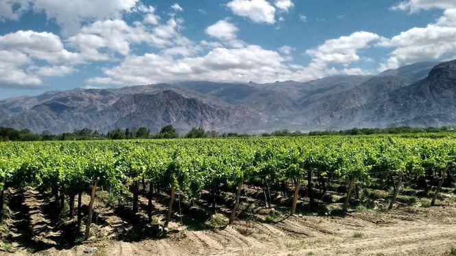 Un viaje por cinco regiones españolas para disfrutar del vino esta Semana Santa