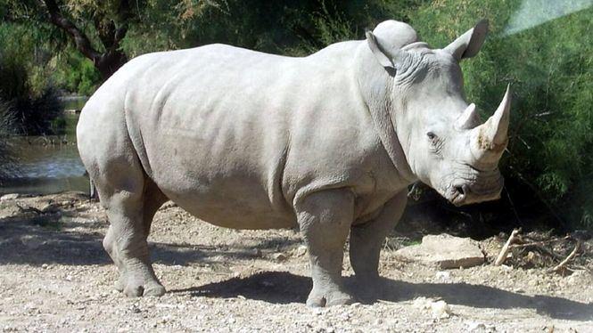 El último rinoceronte blanco, de Carlota Ferrer y José Manuel Mora