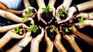 La iniciativa de Accor tienen un alto impacto medioambiental