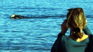 Avistar ballenas australes en Uruguay