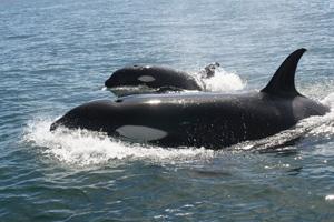 Los mejores viajes para avistar ballenas
