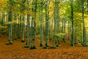 Otoño en Navarra, el irresistible encanto de sus paisajes