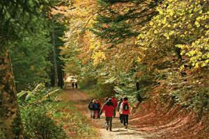Navarra en otoño: planes para disfrutar de la naturaleza